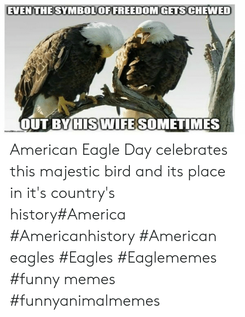 Eagle: EVEN THESYMBOLOFFREEDOMGETS CHEWED  OUT BY HIS WIFE SOMETIMES American Eagle Day celebrates this majestic bird and its place in it's country's history#America #Americanhistory #American eagles #Eagles #Eaglememes #funny memes #funnyanimalmemes