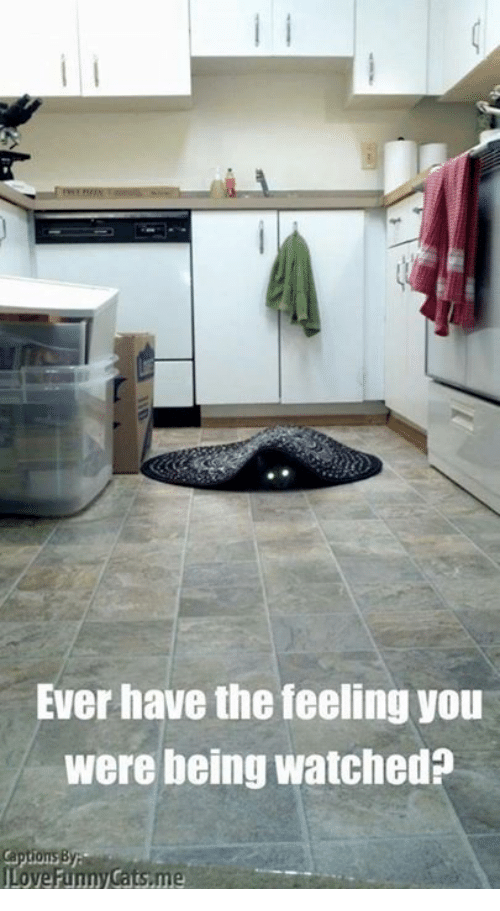 funny cat: Ever have the feeling you  were being watched?  Love Funny Cats,me