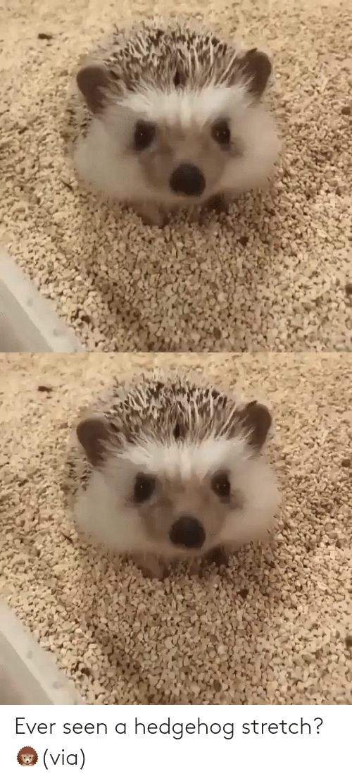 Status: Ever seen a hedgehog stretch? 🦔(via)