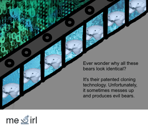 Bears, Technology, and Evil: Ever wonder why all these  bears look identical?  It's their patented cloning  technology. Unfortunately  it sometimes messes up  and produces evil bears.
