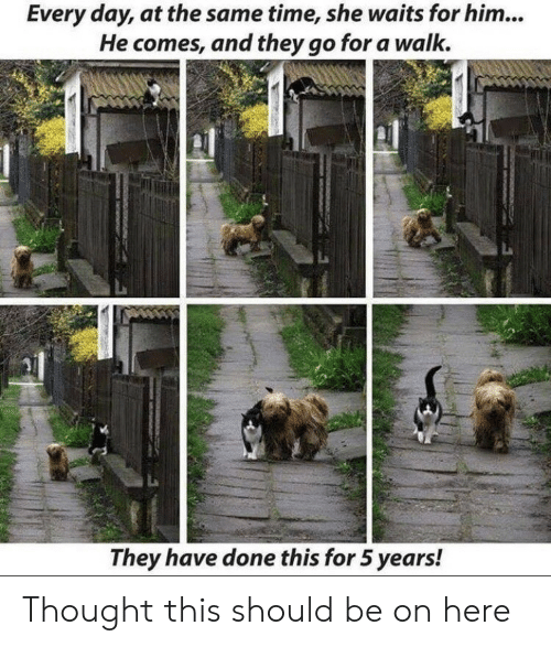 at the same time: Every day, at the same time, she waits for him...  He comes, and they go for a walk.  They have done this for 5 years! Thought this should be on here