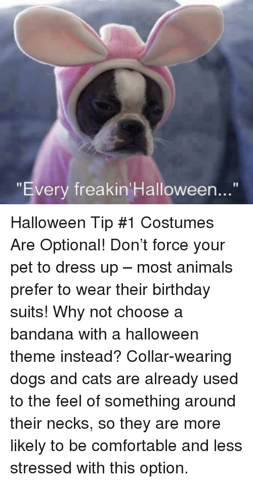 """dog-and-cats: """"Every freakin Halloween..."""" Halloween Tip #1 Costumes Are Optional! Don't force your pet to dress up – most animals prefer to wear their birthday suits!   Why not choose a bandana with a halloween theme instead? Collar-wearing dogs and cats are already used to the feel of something around their necks, so they are more likely to be comfortable and less stressed with this option."""