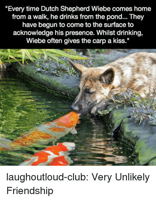 "Club, Drinking, and Tumblr: ""Every time Dutch Shepherd Wiebe comes home  from a walk, he drinks from the pond... They  have begun to come to the surface to  acknowledge his presence. Whilst drinking,  Wiebe often gives the carp a kiss."" laughoutloud-club:  Very Unlikely Friendship"