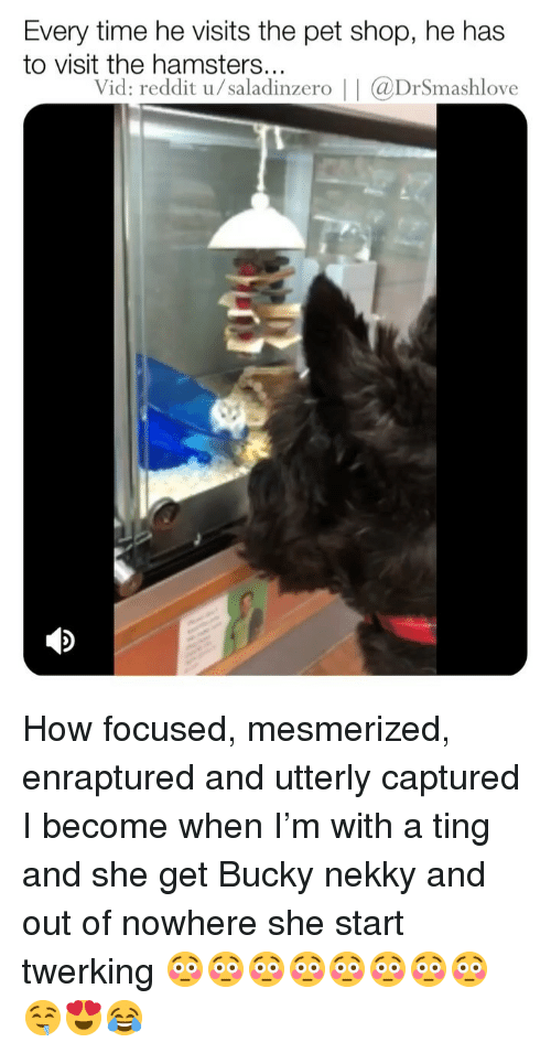 Twerking: Every time he visits the pet shop, he has  to visit the hamsters...  Vid: reddit u/saladinzero     aDrSmashlove How focused, mesmerized, enraptured and utterly captured I become when I'm with a ting and she get Bucky nekky and out of nowhere she start twerking 😳😳😳😳😳😳😳😳🤤😍😂