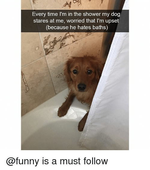 Funny, Shower, and Time: Every time I'm in the shower my dog  stares at me, worried that I'm upset  (because he hates baths) @funny is a must follow