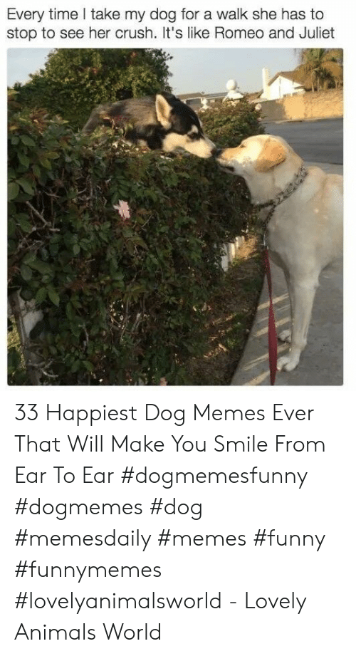 Animals, Crush, and Funny: Every time take my dog for a walk she has to  stop to see her crush. t's like Romeo and Juliet 33 Happiest Dog Memes Ever That Will Make You Smile From Ear To Ear #dogmemesfunny #dogmemes #dog #memesdaily #memes #funny #funnymemes #lovelyanimalsworld - Lovely Animals World