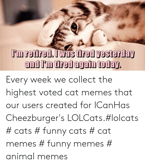 funny cats: Every week we collect the highest voted cat memes that our users created for ICanHas Cheezburger's LOLCats.#lolcats # cats # funny cats # cat memes # funny memes # animal memes