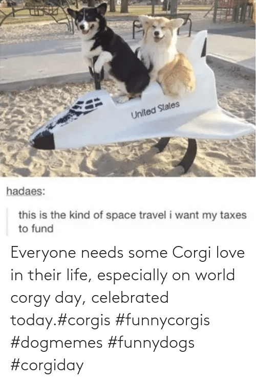 World: Everyone needs some Corgi love in their life, especially on world corgy day, celebrated today.#corgis #funnycorgis #dogmemes #funnydogs #corgiday