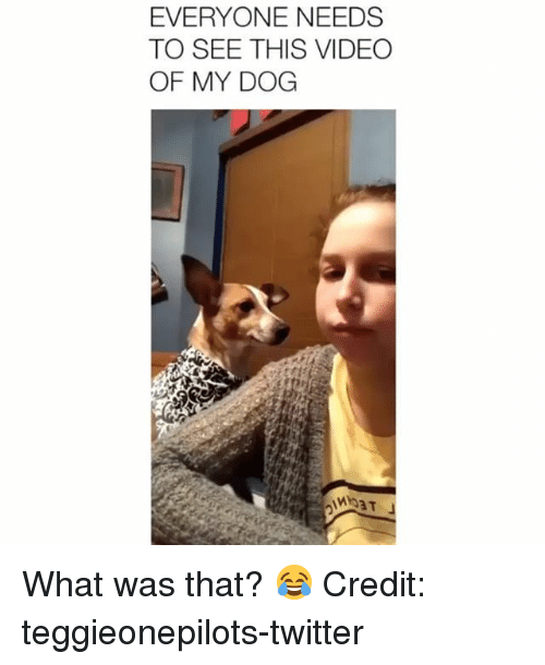 Memes, Twitter, and Video: EVERYONE NEEDS  TO SEE THIS VIDEO  OF MY DOG What was that? 😂 Credit: teggieonepilots-twitter