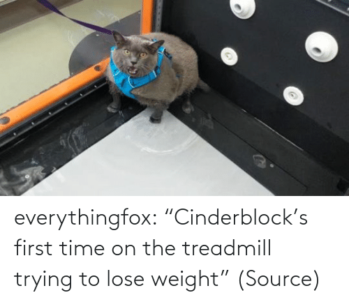 "Weight: everythingfox: ""Cinderblock's first time on the treadmill trying to lose weight"" (Source)"