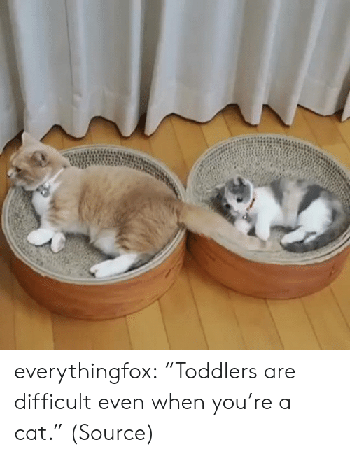 """Aww, Reddit, and Target: everythingfox: """"Toddlers are difficult even when you're a cat."""" (Source)"""