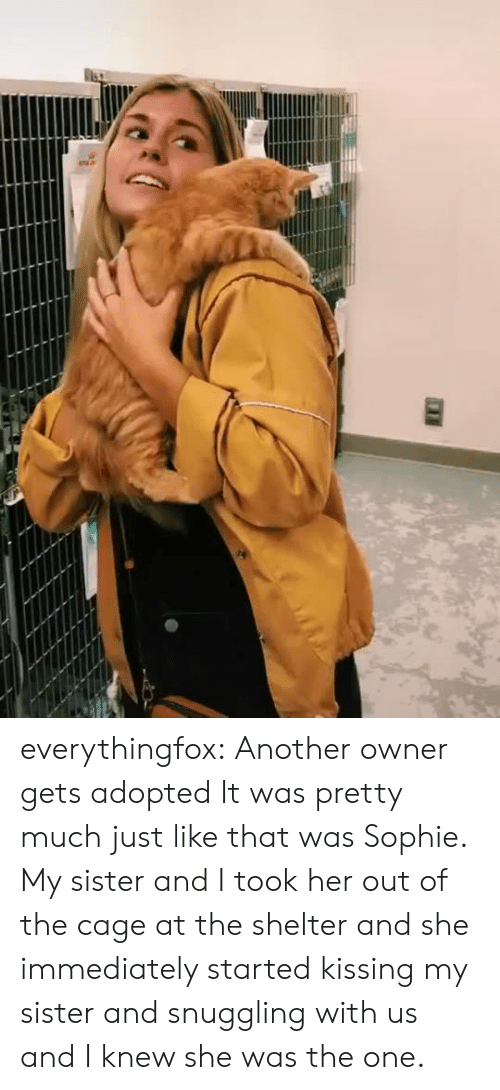 Adopted: everythingfox:   Another owner gets adopted  It was pretty much just like that was Sophie. My sister and I took her out of the cage at the shelter and she immediately started kissing my sister and snuggling with us and I knew she was the one.