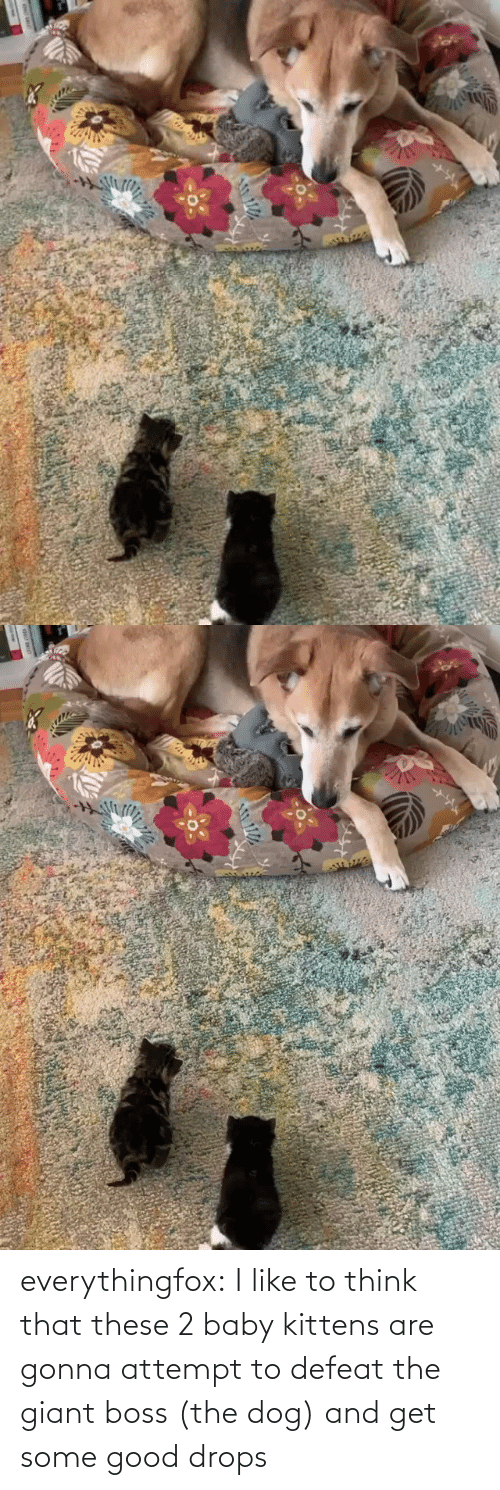 Kittens: everythingfox:  I like to think that these 2 baby kittens are gonna attempt to defeat the giant boss (the dog) and get some good drops