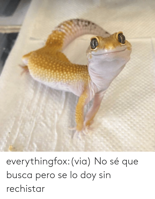 Aww, Reddit, and Tumblr: everythingfox:(via)   No sé que busca pero se lo doy sin rechistar