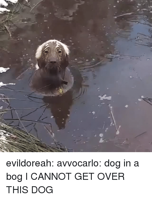 Target, Tumblr, and Blog: evildoreah: avvocarlo: dog in a bog I CANNOT GET OVER THIS DOG