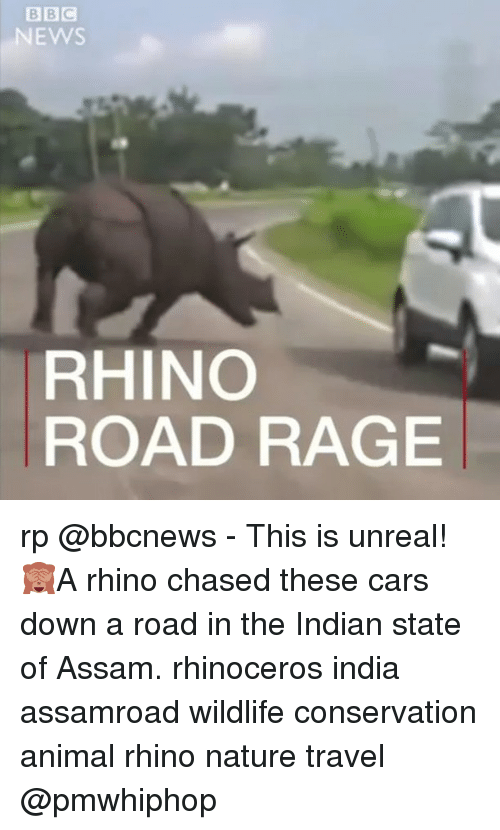 Unrealism: EWS  ROAD RAGE  RHINO rp @bbcnews - This is unreal! 🙈A rhino chased these cars down a road in the Indian state of Assam. rhinoceros india assamroad wildlife conservation animal rhino nature travel @pmwhiphop