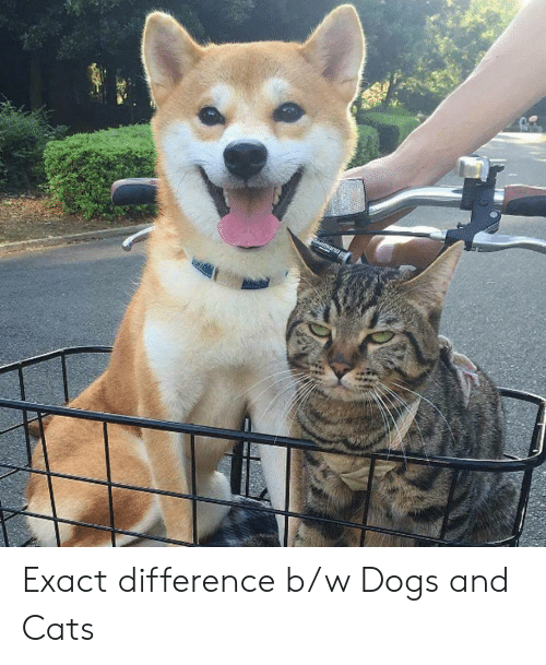 b&w: Exact difference b/w Dogs and Cats