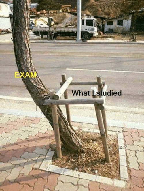 exam: EXAM  What Lstudied