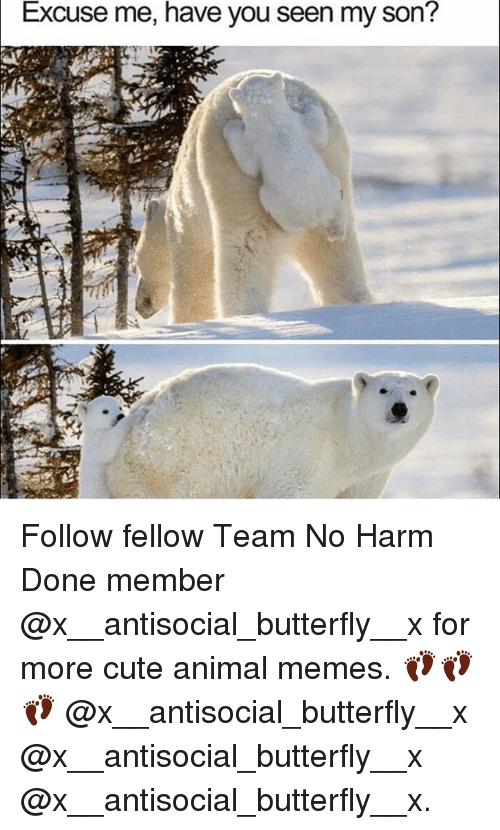 have you seen my son: Excuse me, have you seen my son? Follow fellow Team No Harm Done member @x__antisocial_butterfly__x for more cute animal memes. 👣👣👣 @x__antisocial_butterfly__x @x__antisocial_butterfly__x @x__antisocial_butterfly__x.
