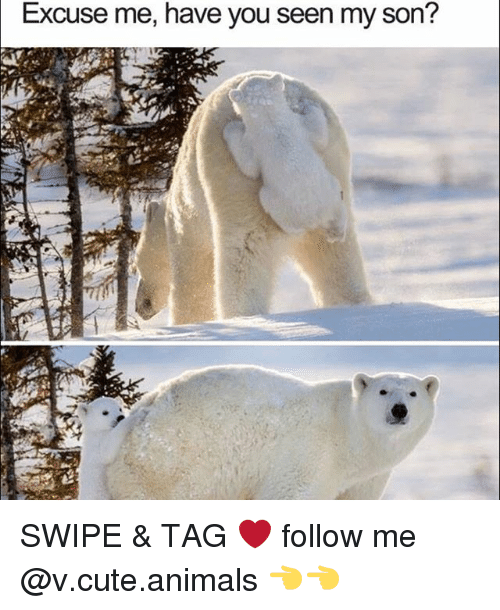 have you seen my son: Excuse me, have you seen my son? SWIPE & TAG ❤️ follow me @v.cute.animals 👈👈