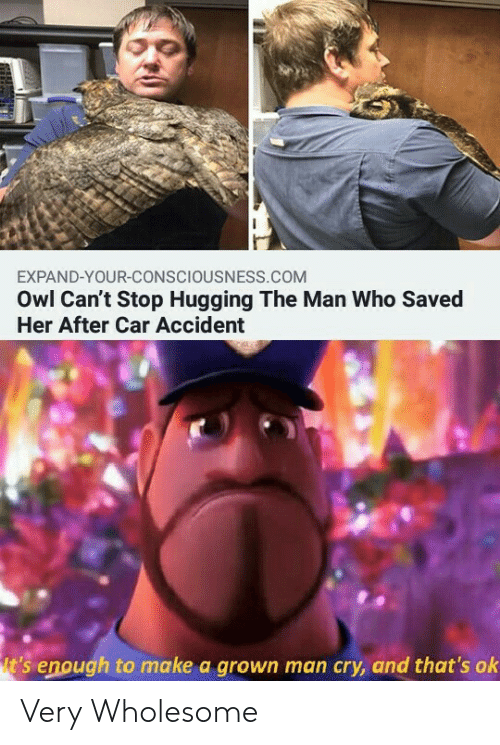 hugging: EXPAND-YOUR-CONSCIOUSNESS.COM  Owl Can't Stop Hugging The Man Who Saved  Her After Car Accident  t's enough to make a grown man cry, and that's ok Very Wholesome