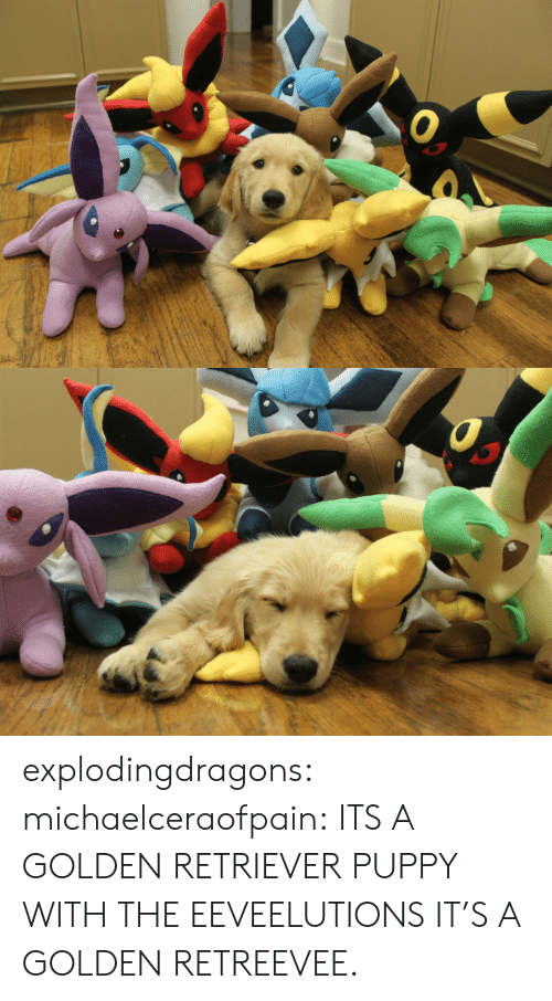Target, Tumblr, and Blog: explodingdragons:  michaelceraofpain:  ITS A GOLDEN RETRIEVER PUPPY WITH THE EEVEELUTIONS  IT'S A GOLDEN RETREEVEE.