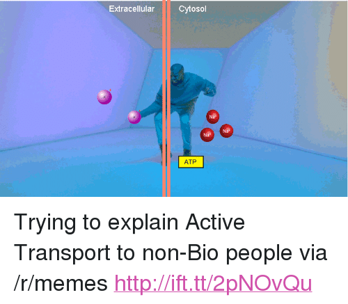 """atp: Extracellular Cytosol  Na  ATP <p>Trying to explain Active Transport to non-Bio people via /r/memes <a href=""""http://ift.tt/2pNOvQu"""">http://ift.tt/2pNOvQu</a></p>"""