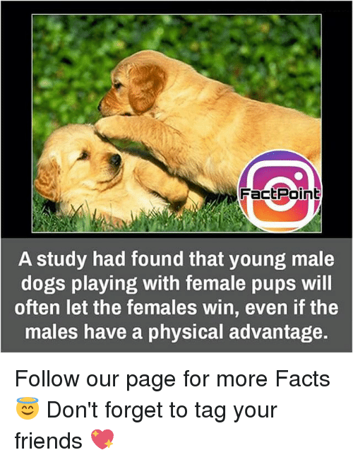 physic: Fact Point  A study had found that young male  dogs playing with female pups will  often let the females win, even if the  males have a physical advantage. Follow our page for more Facts 😇 Don't forget to tag your friends 💖
