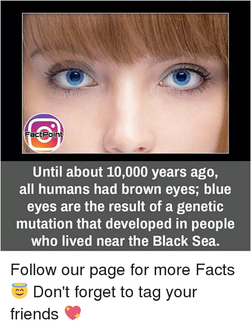 Brown Eye: Fact Point  Until about 10,000 years ago,  all humans had brown eyes, blue  eyes are the result of a genetic  mutation that developed in people  who lived near the Black Sea. Follow our page for more Facts 😇 Don't forget to tag your friends 💖