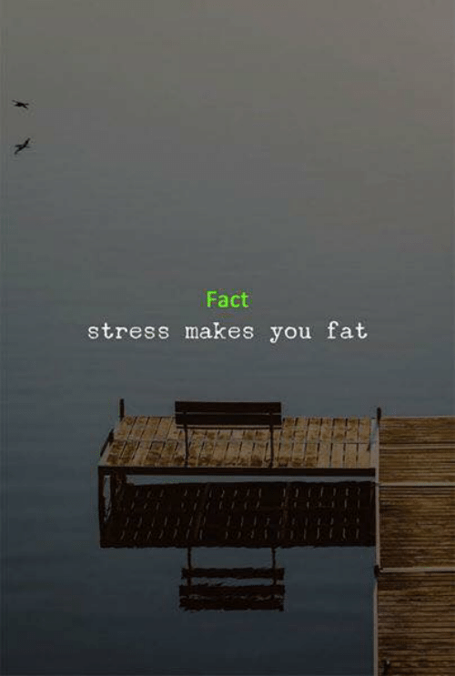 Fat, Stress, and You: Fact  stress makes you fat