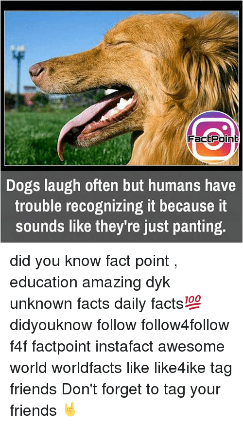 Dog Laughing: FactPoint  Dogs laugh often but humans have  trouble recognizing it because it  Sounds like they're just panting. did you know fact point , education amazing dyk unknown facts daily facts💯 didyouknow follow follow4follow f4f factpoint instafact awesome world worldfacts like like4ike tag friends Don't forget to tag your friends 🤘