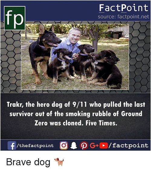 rubble: FactPoint  source: factpoint.net  Trakr, the hero dog of 9/11 who pulled the last  survivor out of the smoking rubble of Ground  Zero was cloned. Five Times.  f/thefactpoint O G/factpoint Brave dog 🐕