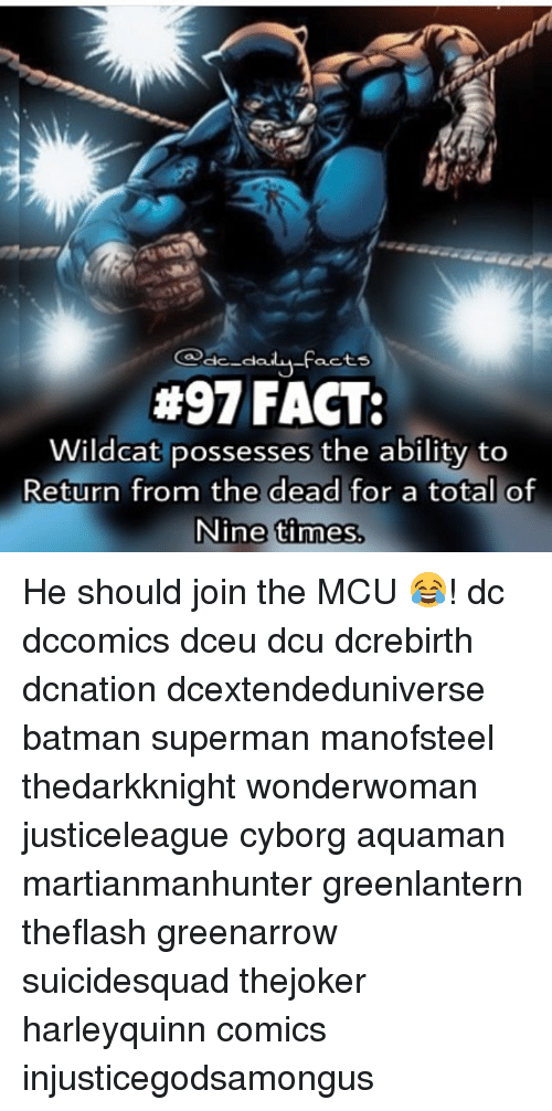 Memes, Batman Superman, and 🤖: -Facts  #97 FACT:  Wildcat possesses the ability to  Return from the dead for a total of  Nine times He should join the MCU 😂! dc dccomics dceu dcu dcrebirth dcnation dcextendeduniverse batman superman manofsteel thedarkknight wonderwoman justiceleague cyborg aquaman martianmanhunter greenlantern theflash greenarrow suicidesquad thejoker harleyquinn comics injusticegodsamongus