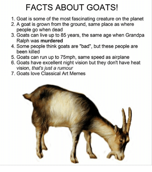 """Classic Art: FACTS ABOUT GOATS!  1. Goat is some of the most fascinating creature on the planet  2. A goat is grown from the ground, same place as where  people go when dead  3. Goats can live up to 85 years, the same age when Grandpa  Ralph was murdered  4. Some people think goats are """"bad"""", but these people are  been killed  5. Goats can run up to 75mph, same speed as airplane  6. Goats have excellent night vision but they don't have heat  vision, that's just a rumour  7. Goats love Classical Art Memes"""