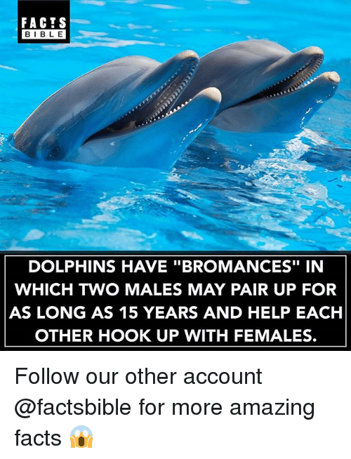 "Bibled: FACTS  BIBLE  BIBL E  DOLPHINS HAVE ""BROMANCES"" IN  WHICH TWO MALES MAY PAIR UP FOR  AS LONG AS 15 YEARS AND HELP EACH  OTHER HOOK UP WITH FEMALES. Follow our other account @factsbible for more amazing facts 😱"