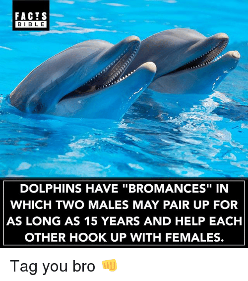 "Bibled: FACTS  BIBLE  BIBL E  DOLPHINS HAVE ""BROMANCES"" IN  WHICH TWO MALES MAY PAIR UP FOR  AS LONG AS 15 YEARS AND HELP EACH  OTHER HOOK UP WITH FEMALES. Tag you bro 👊"