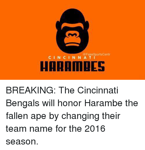 Cincinnati Bengals: @ FakeSportsCentr  CINCINN A TI  HARAMDES BREAKING: The Cincinnati Bengals will honor Harambe the fallen ape by changing their team name for the 2016 season.