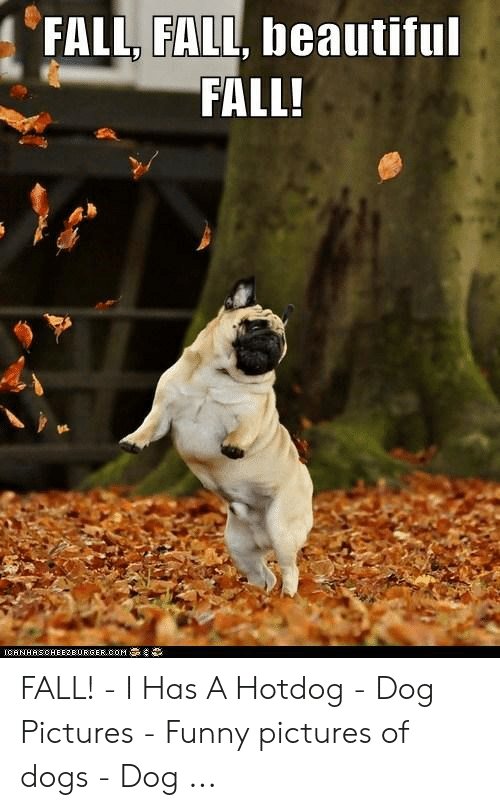 Fall Meme: FALL, FALL, beautiful  FALL!  IC6NHASCHEE2EURGER cOM FALL! - I Has A Hotdog - Dog Pictures - Funny pictures of dogs - Dog ...