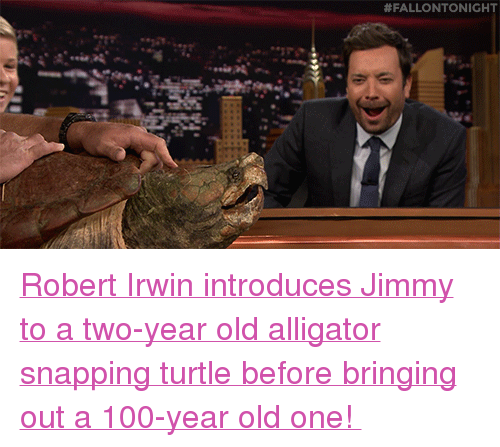 """Alligator Snapping Turtle: <p><a href=""""https://www.youtube.com/watch?v=mCtSiImXpRo&amp;t=15s"""" target=""""_blank"""">Robert Irwin introduces Jimmy to a two-year old alligator snapping turtle before bringing out a 100-year old one!</a></p>"""