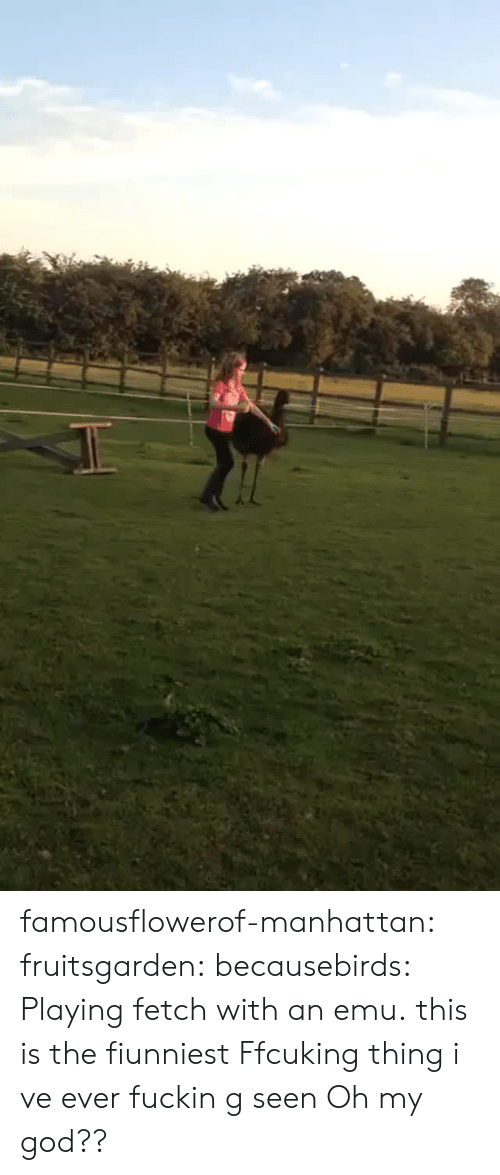 emu: famousflowerof-manhattan: fruitsgarden:  becausebirds:  Playing fetch with an emu.  this is the fiunniest Ffcuking thing i ve ever fuckin g seen   Oh my god??