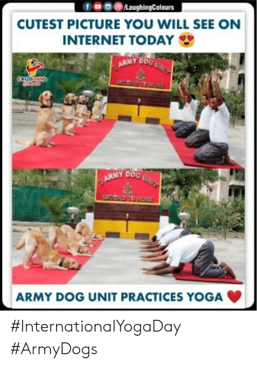 Internet, Army, and Today: fanLaughingColours  CUTEST PICTURE YOU WILL SEE ON  INTERNET TODAY  ARMY DOG GN  SECODDNOE  CAOGHINO  ARMY DOG UNIT  SESCOTONONE  ARMY DOG UNIT PRACTICES YOGA #InternationalYogaDay #ArmyDogs