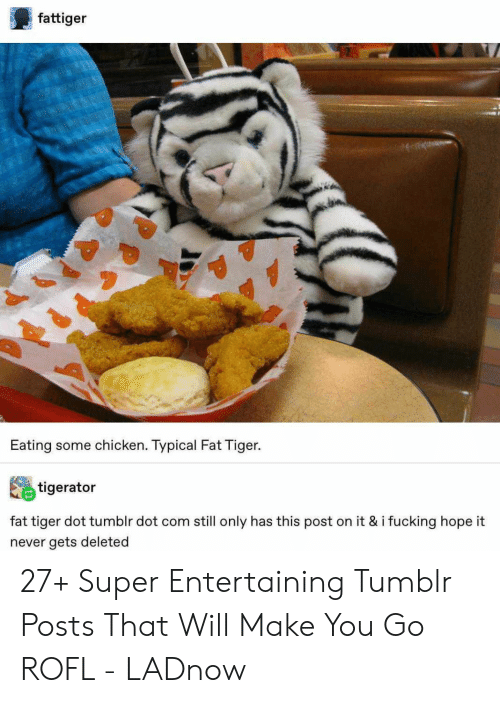 typical: fattiger  Eating some chicken. Typical Fat Tiger.  tigerator  fat tiger dot tumblr dot com still only has this post on it & i fucking hope it  never gets deleted 27+ Super Entertaining Tumblr Posts That Will Make You Go ROFL - LADnow