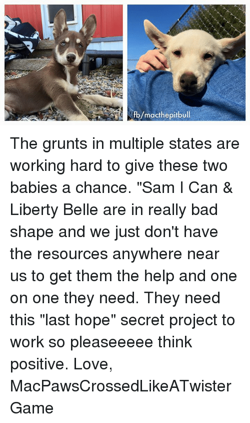 """liberty bell: fb/macthe pitbull The grunts in multiple states are working hard to give these two babies a chance. """"Sam I Can & Liberty Belle are in really bad shape and we just don't have the resources anywhere near us to get them the help and one on one they need. They need this """"last hope"""" secret project to work so pleaseeeee think positive.  Love,  MacPawsCrossedLikeATwisterGame"""