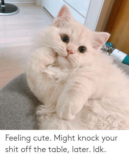 knock: Feeling cute. Might knock your shit off the table, later. Idk.