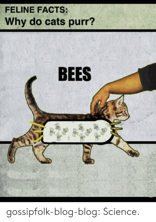 Cats, Facts, and Tumblr: FELINE FACTS:  Why do cats purr?  BEES gossipfolk-blog-blog: Science.