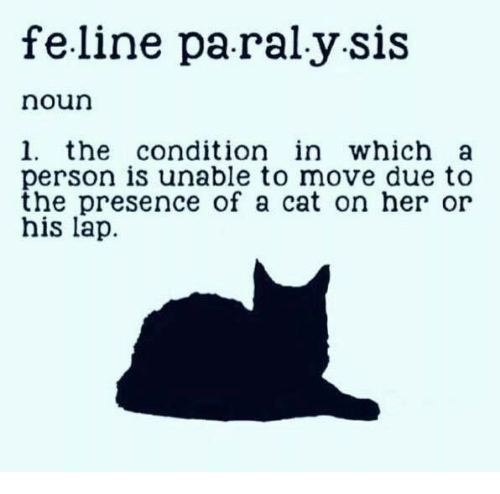 Memes, 🤖, and Her: feline paraly sis  noun  1. the condition in which a  person is unable to move due t<o  the presence of a cat on her or  his lap.