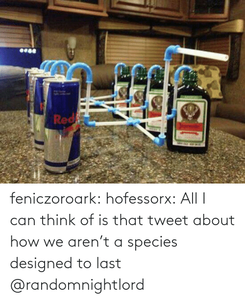 Designed: feniczoroark:  hofessorx:  All I can think of is that tweet about how we aren't a species designed to last    @randomnightlord
