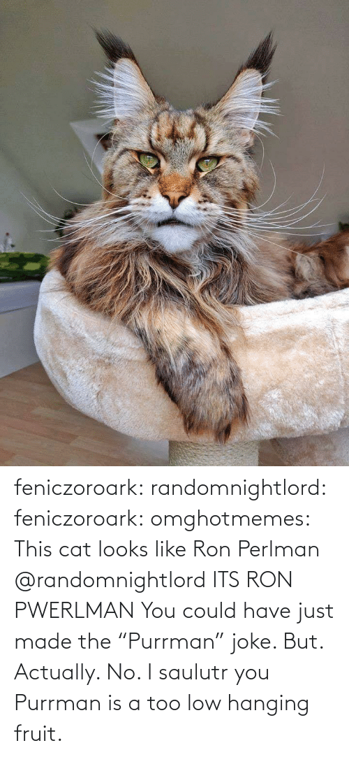 "Tumblr, Blog, and Cat: feniczoroark:  randomnightlord:  feniczoroark:  omghotmemes:  This cat looks like Ron Perlman   @randomnightlord    ITS RON PWERLMAN   You could have just made the ""Purrman"" joke. But. Actually. No. I saulutr you   Purrman is a too low hanging fruit."