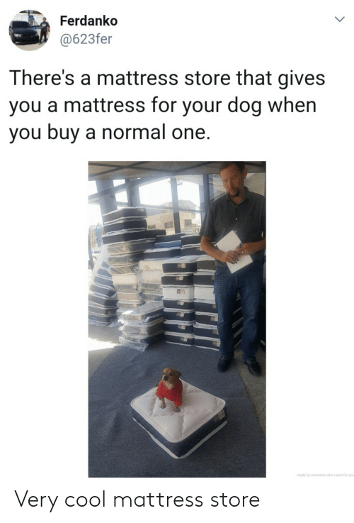 Cool, Mattress, and Dog: Ferdanko  @623fer  LL  There's a mattress store that gives  you a mattress for your dog when  you buy a normal one.  made by someone who cares for you  > Very cool mattress store