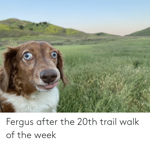 Walk,  Week, and The: Fergus after the 20th trail walk of the week